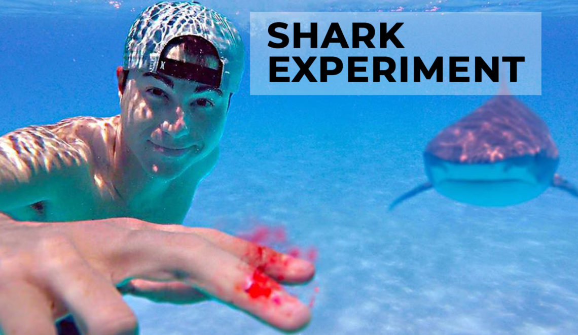 Former NASA Engineer Plays With Sharks and Human Blood